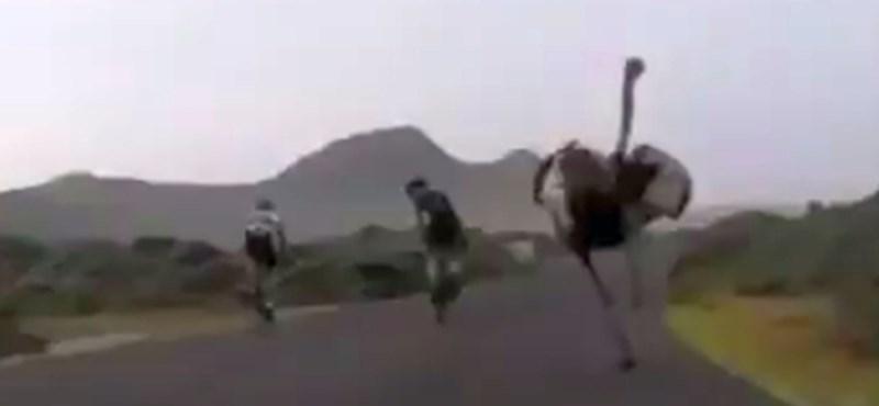 Máris itt a hét videója: ennél viccesebb kerékpáros-üldözést még biztosan nem látott